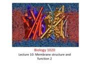 Lecture 10_ Membrane Structure & Function 2