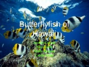 Butterfly fish of Hawaii