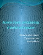 Anatomy of penis, pathophysiology of erection and impotence.pptx