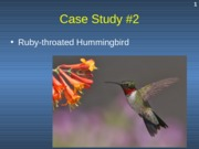 Case Study #2 - Ruby-throated Hummingbird