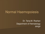 Normal Haemopoiesis 3.57.51 PM