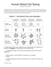 Human Blood Typing POGIL (1).docx - Human Blood Cell ...