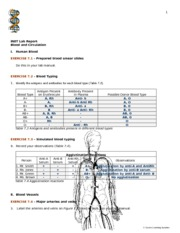 Blood and Circulation Lab BLANK