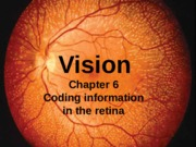 Part 5 Coding information in the retina without narration