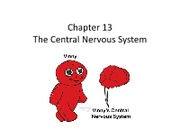 Ch. 13 Central nervous system (Completed)