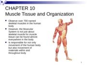 Anatomy Lecture 10 Muscles