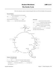 SBI4U_calvincycle - of the Calvin Cycle? Answer: 1,3 ...