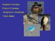 Lecture on Aves