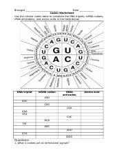 Codon Worksheet Doc