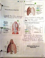 Thoracic muscles