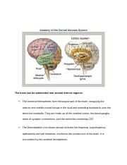 ANATOMY & PHYSIOLOGY OF CNS.docx