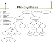 Photosynthesis Concept Map - Photosynthesis A B C D E F G H I J K ...
