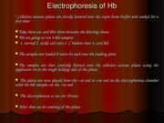 Electrophoresis of Hb