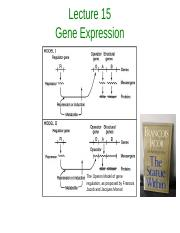 Lecture 15 Gene Expression-1