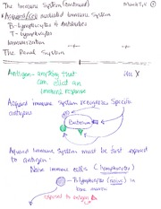 Lecture 22- the immune system continued