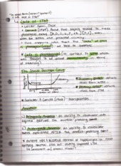 Lecture 6 Working Memory Notes continued