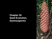 BIOL+172+6+Evolution+of+Seeds%2C+Gymnosperms