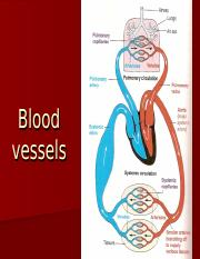 Blood Vessels.ppt
