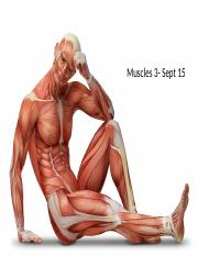 Muscles3-Sept15(s)