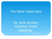 The White Tailed Deer