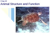 4. Animal Structure and Function and Nutrition post