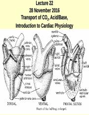 Lecture 22s Carbon Dioxide and Intro to Cardiac Physiol 11-28-16.ppt