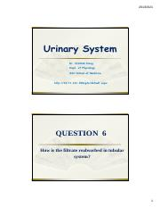 7 - Urinary System II.pdf