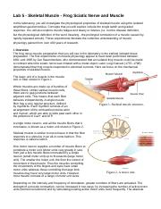 Lab 5 - Skeletal Muscle - Frog Sciatic Nerve and Muscle.docx