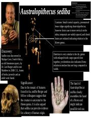 Anthropology Poster