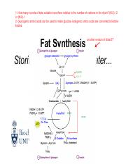 Lecture 15 Wednesday, June 15 (Fat Catabolism).pdf
