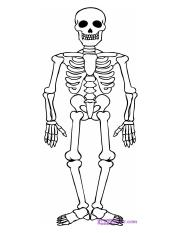 how-to-draw-a-skeleton-step-7_1_000000012956_5.jpg