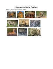 Unit1.Dichotomous Key for Panthera.docx