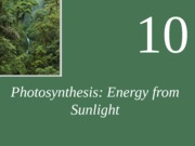 (5) Photosynthesis