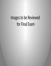 Images to be Reviewed for Final Exam (1).pptx