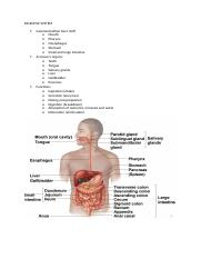 Anatomy notes - DIGESTIVE SYSTEM