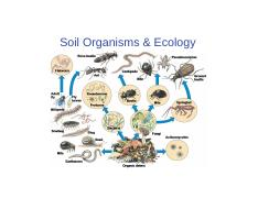 CH 11_Soil Organisms & Ecology