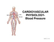 Cardiovascular system- blood pressure