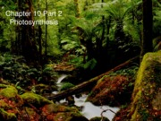 Chapter 10- Photosynthesis Part 2