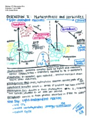 Herbicides_Photosynthesis_Discussion_Overheads[1]