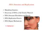 BIO%20311c%20Ch14-DNA-Structure%20%26%20Replication