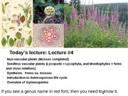 Plant Diversity Lecture 4 (Mosses finished, Intro to Vasc Plants, Lycophyta and Monilophyta-110314