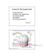 Lecture 8 Genetic Code tRNA (2 per page)