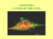 CH 6 A Tour of the Cell