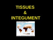 ANP300 Lecture 2-Tissues
