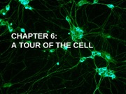 06_BSC_2010_A_Tour_of_the_Cell_POST