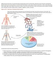 Blood Vessels study guide.docx