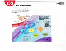 Action of a Peptide Hormone Diagram-1 (1).pdf