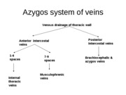 Azygos system of veins