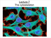 Lecture 6--the cytoskeleton-1