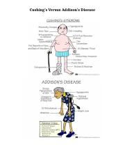 Cushings versus Addisons Graphic